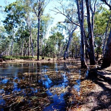A drought refuge within the Barmah-Millewa Forest. Photo credit: Arthur Mostead