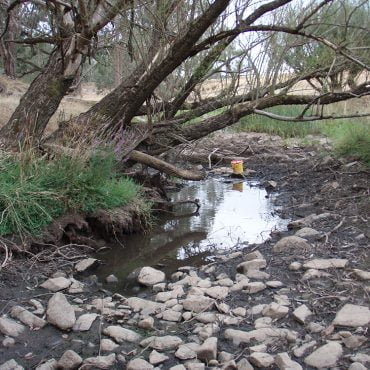 A drying refuge of known habitat for Pygmy Perch Photo credit: Luke Pearce