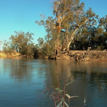 Anabranch systems such as Chowilla in SA provide vital year-round habitat for species including Murray cod. Photo credit: Jason Higham