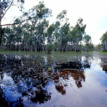 Barmah-Millewa Forest. Photo credit: Arthur Mostead