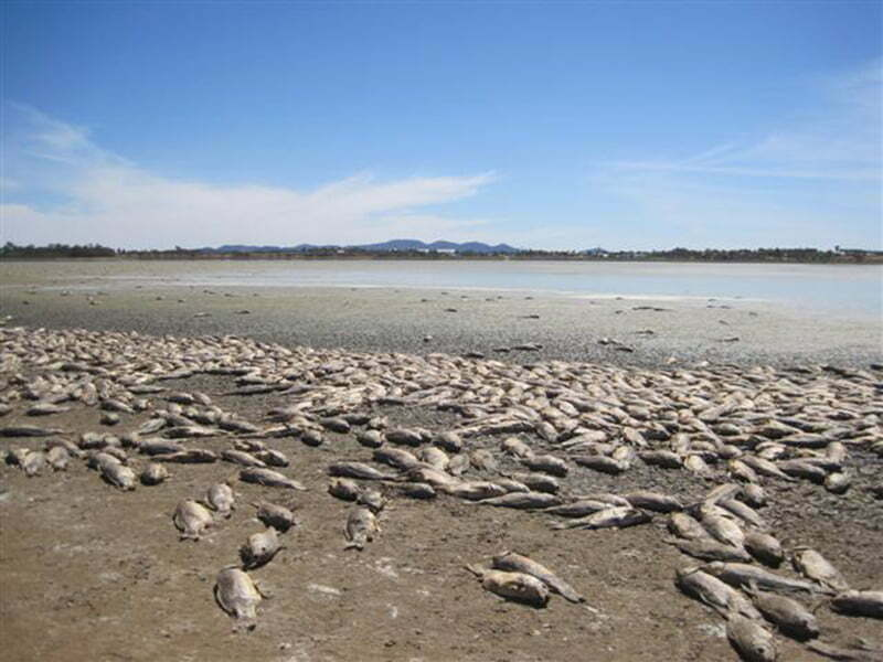 Managing native fish during drought