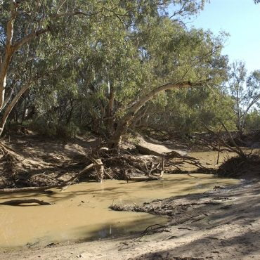 The Paroo River during low flows. Photo credit: Arthur Mostead